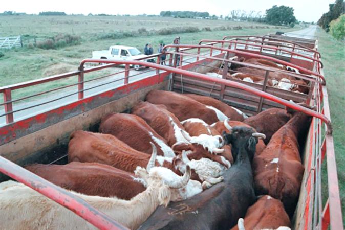 Decomisaron un camión que transportaba 5 animales de dudosa procedencia
