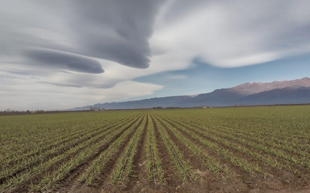 Mendoza: viernes nublado y fin de semana frío con lloviznas aisladas